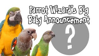 Parrot Wizard's New Baby Announcement!!!