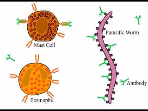 Nuovo significa da parassiti in un organismo