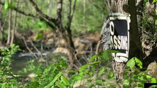 The Bigfoot Incident – Bigfoot's Wilderness