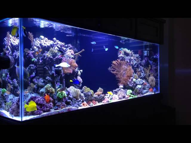 REEF TANK ADDICTION - PILOT -  Season 1 Episode 1