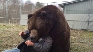 animale imbratisare de urs