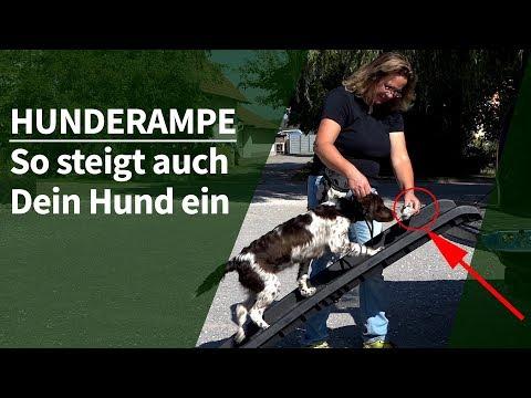 Hunderampe ► So steigt auch Dein Hund über eine Hunderampe fürs Auto ein ► Praxisanleitung