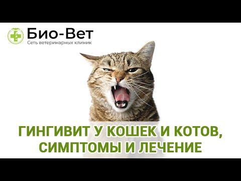 Гингивит у кошек и котов, симптомы и лечение