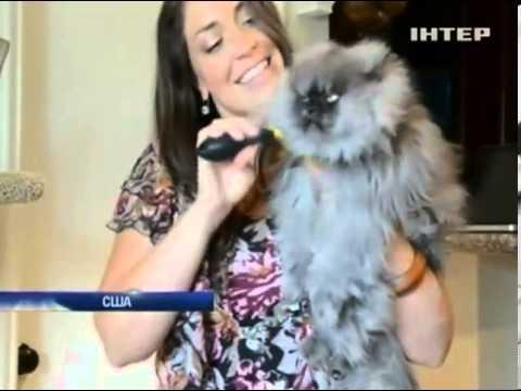Кот с 23-сантиметровой шерстью попал в Книгу рекордов