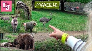 Zoo de Marcelle 2017 Испания Часть 1 В Зоопарке Marcelle Natureza Lugo