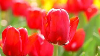 Красивая нежная музыка и цветы.