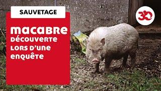 Macabres Découvertes Pour Les équipes De La Fondation 30 Millions D'Amis Lors D'un Sauvetage...