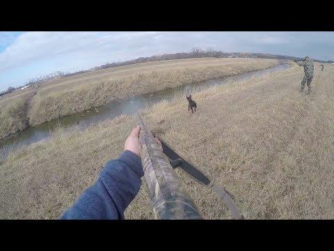 jump-shooting-geese