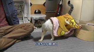 リラックマの毛布を気に入っている猫☆歩いても、座っても落ちないよ☆パパにべったりな甘えん坊猫リキちゃんリキちゃんねる猫動画Catvideosキジトラ猫との暮らし