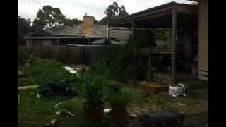 Walkthrough Of Large Netted Cat Enclosure Surrounding Entire House