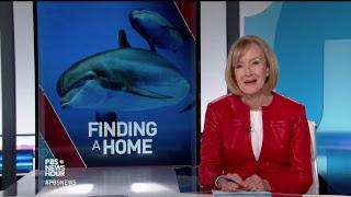 PBS NewsHour full episode, January 24, 2018