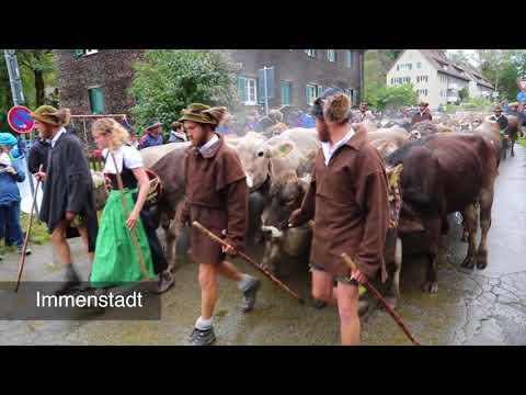Viehscheidsaison im Allgäu 2017