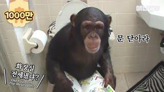여느 가정집의 흔한 아침 풍경 ㅣ Ordinary Morning Scenery Of A Family With Chimpanzees