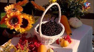 В Новгородской области стартовали традиционные осенние сельхозярмарки