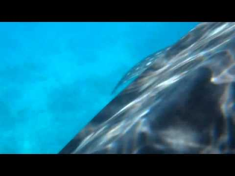 Olympus TG-320 Underwater Test - Whale Shark