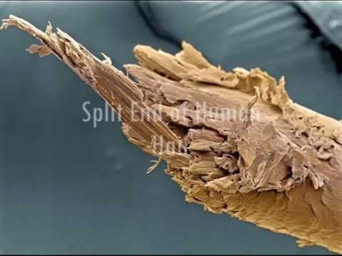 Human Body Under the Microscope