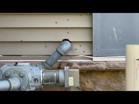 Hornets Found Nesting Above the Gas Line in...