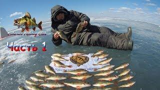 Отчет о рыбалке на шаблише