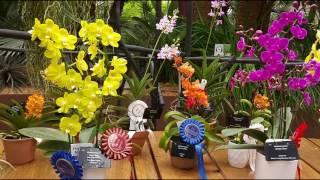 orchid show singapore 2016 magnificent garden festival