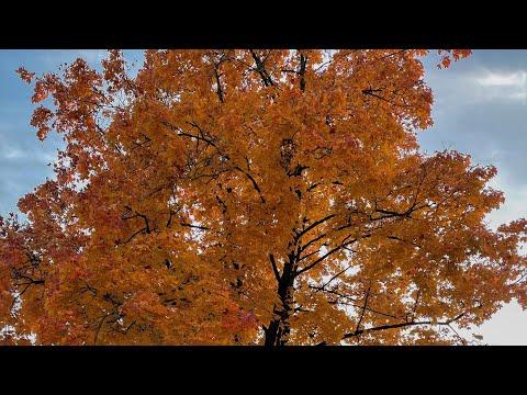 Осень в Германии     Улицами Мюнхена   Красивые дома и немецкие аккуратные участки  жизньвгермании