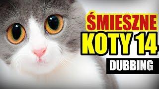 śmieszne Koty I Psy Widzów Free Online Videos Best Movies Tv Shows