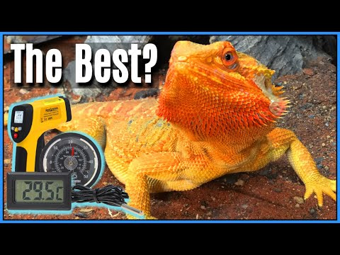 Thermometer Guide for Reptiles: The Best Types of Thermometers for Reptiles & How to Use them