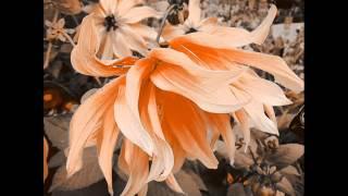 Wildflower   (Skylark    Lyrics)