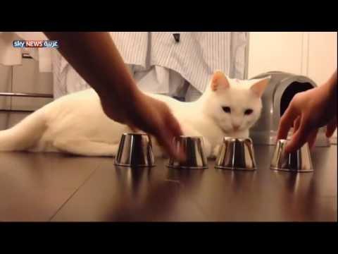 Chú mèo dễ thương lại còn thông minh nữa chứ, đáng yêu toá
