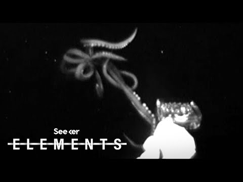 Scientists Just Captured This Rare Giant Squid Footage, Here's How