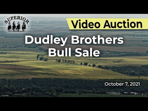 Dudley Brothers Bull Sale