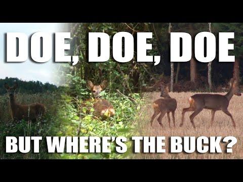 Doe, Doe, Doe – but where's the Buck?