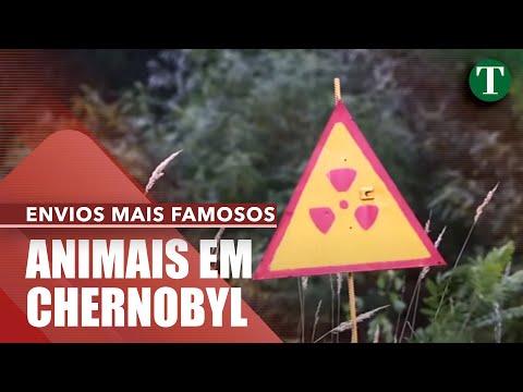 Como está Chernobyl 30 anos depois do desastre nuclear?