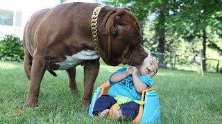 ТОП 5 лучших собак нянек. ЛУЧШИЕ СОБАКИ ДЛЯ ДЕТЕЙ!