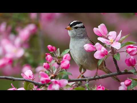 Richard Noll ~ Early Spring Video | Songs for Spring