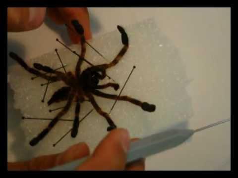 Parassiti in scienza veterinaria