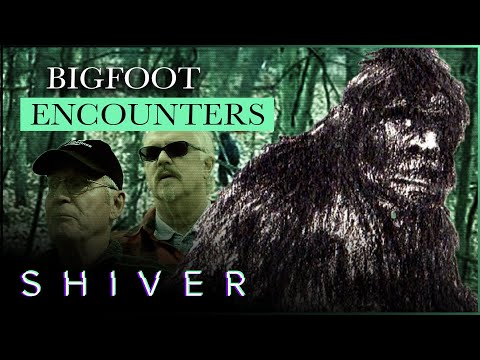 The Sasquatch Shocks Those Who Have Seen Him
