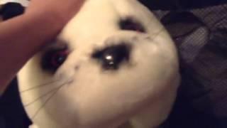Dumb seal pup