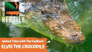 ANIMAL TALES WITH TIM FAULKNER | EPISODE 19 | ELVIS THE CROCODILE