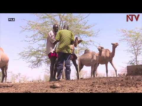 East African states discussing protocol on free movement of livestock