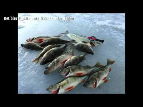 Isfiskeri efter aborrer