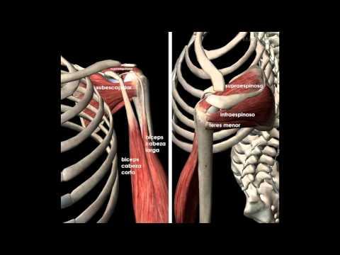 Sinovitis unilateral de la articulación de la rodilla es