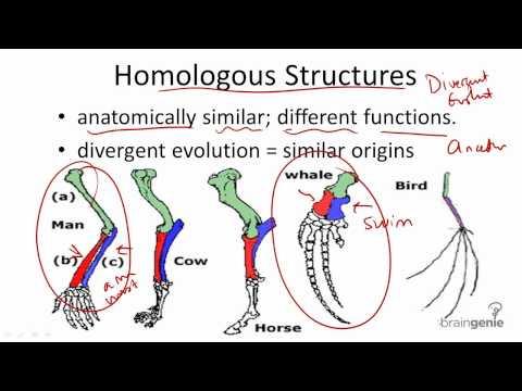 Homologous And Vestigial Structure