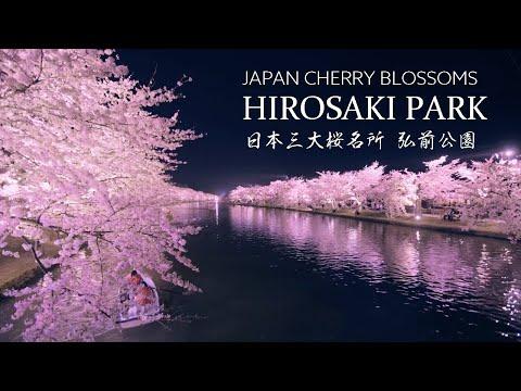 Incredible Cherry Blossom Bloom at Hirosaki Park in Japan