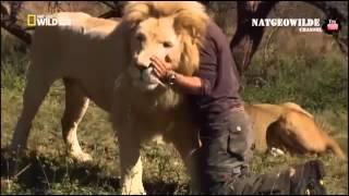 Невероятная дружба человека и львов - NAT GEO WILD
