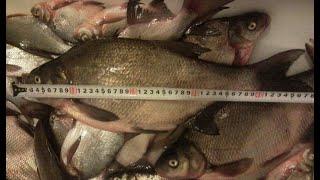 Когда начинается запрет на рыбалку в калининграде 2020