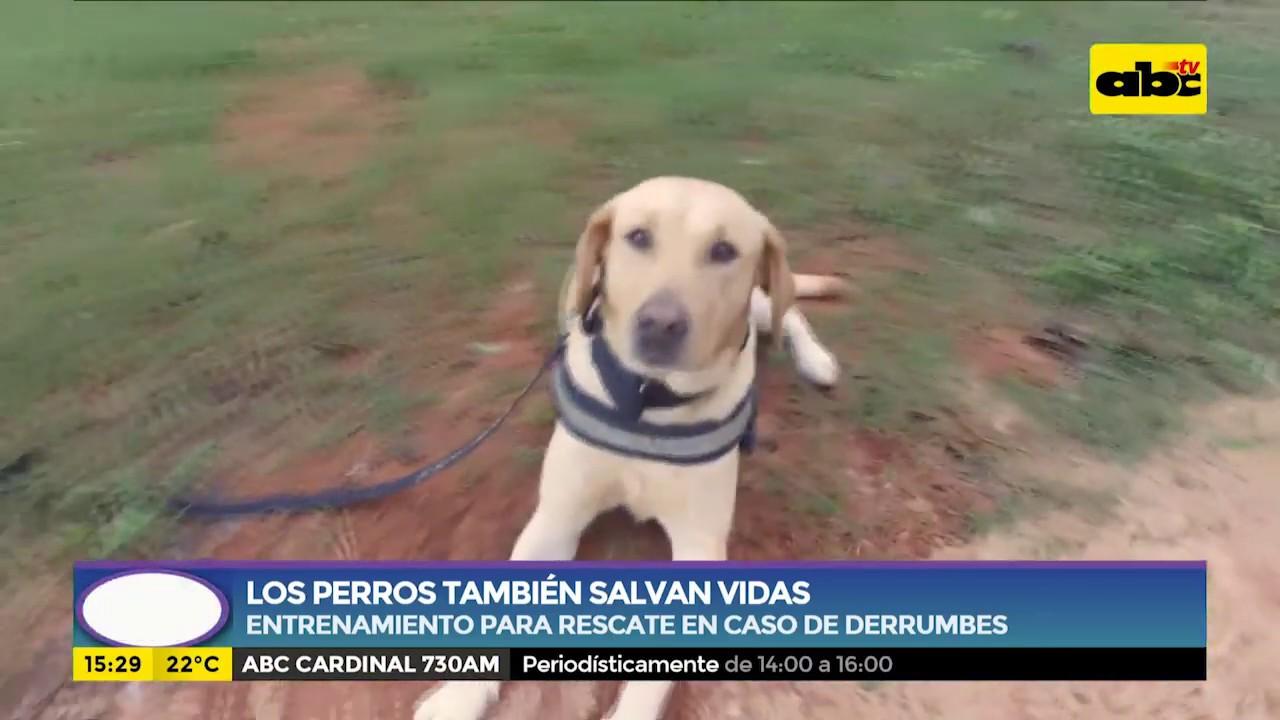 Los perros también salvan vidas-Entrenamiento para rescate en caso de siniestros