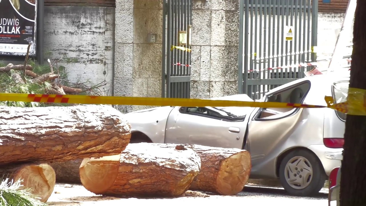Crolla un albero nel centro di Roma, due feriti gravi