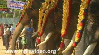 Parippally Gajamela - the elephantine festival