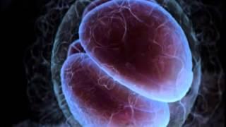 Vidéo p. 75 - Le mystère des jumeaux