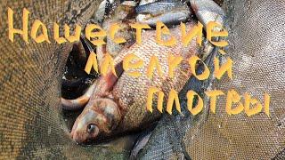Отчет о рыбалке в украине 2020 киев